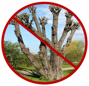 no-tree-topping